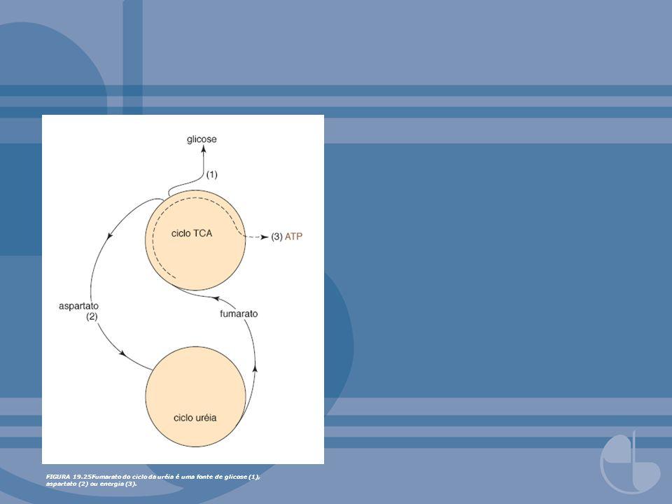 FIGURA 19.35Formação de selenocisteinil tRNA a partir de seril tRNA é via um intermediário fosfoseril tRNA.
