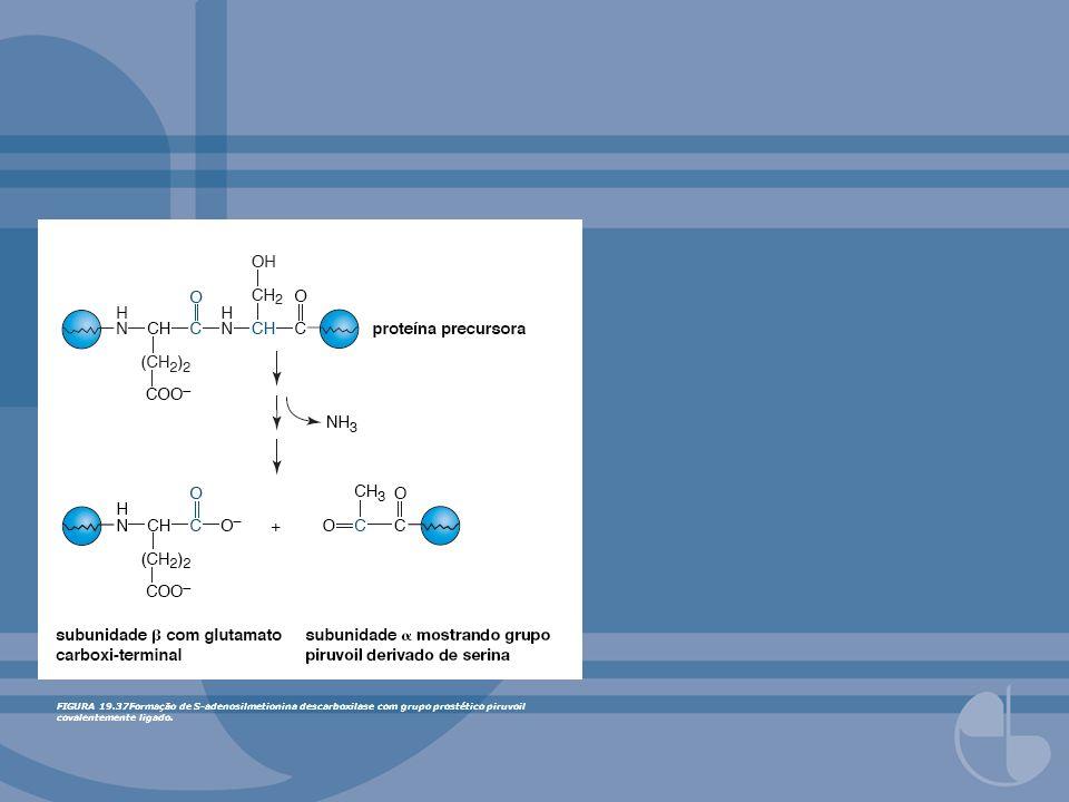 FIGURA 19.58Ressíntese de metionina.