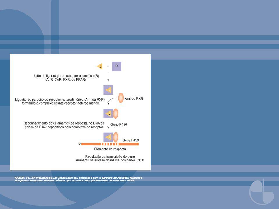 FIGURA 11.15A interação de um ligante com seu receptor e com o parceiro do receptor, formando receptores complexos heterodiméricos que iniciam a induç