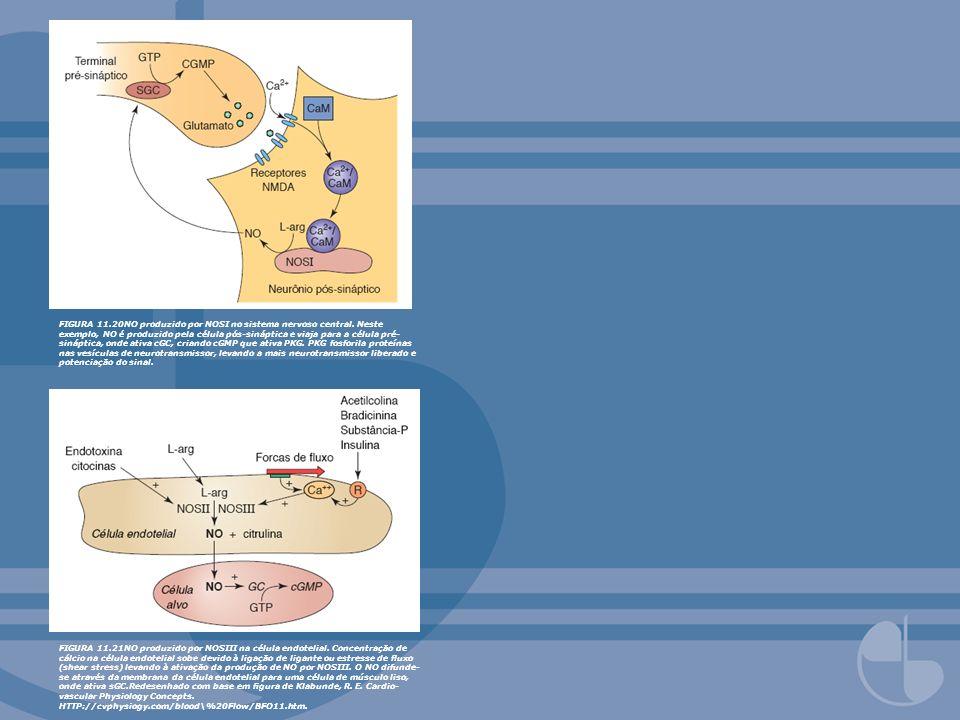 FIGURA 11.20NO produzido por NOSI no sistema nervoso central. Neste exemplo, NO é produzido pela célula pós-sináptica e viaja para a célula pré- sináp