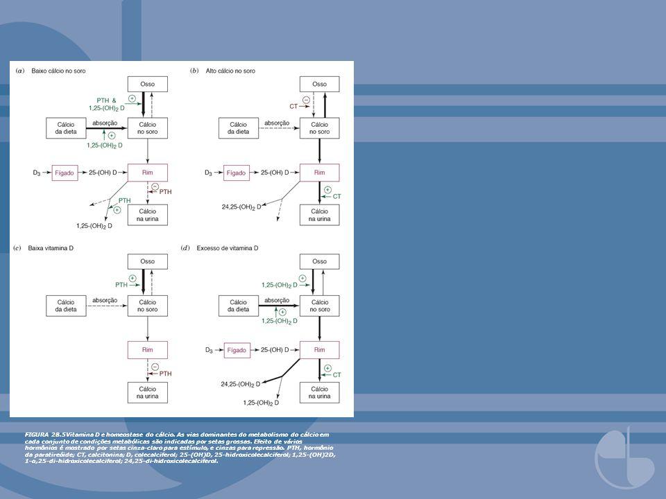 FIGURA 28.5Vitamina D e homeostase do cálcio. As vias dominantes do metabolismo do cálcio em cada conjunto de condições metabólicas são indicadas por