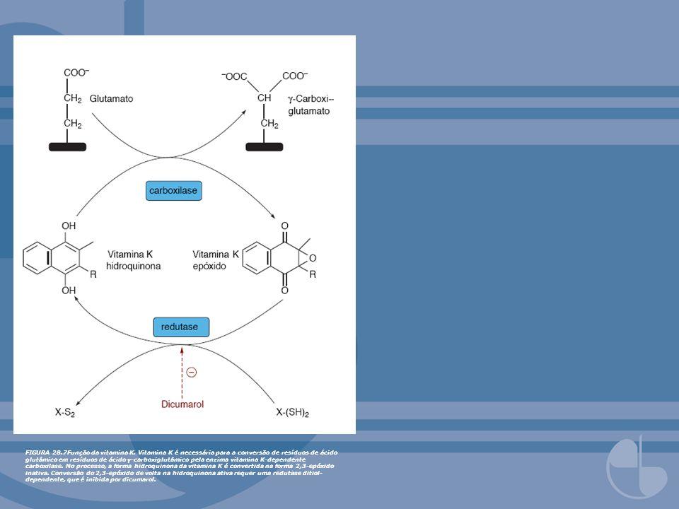 FIGURA 28.7Função da vitamina K. Vitamina K é necessária para a conversão de resíduos de ácido glutâmico em resíduos de ácido γ-carboxiglutâmico pela