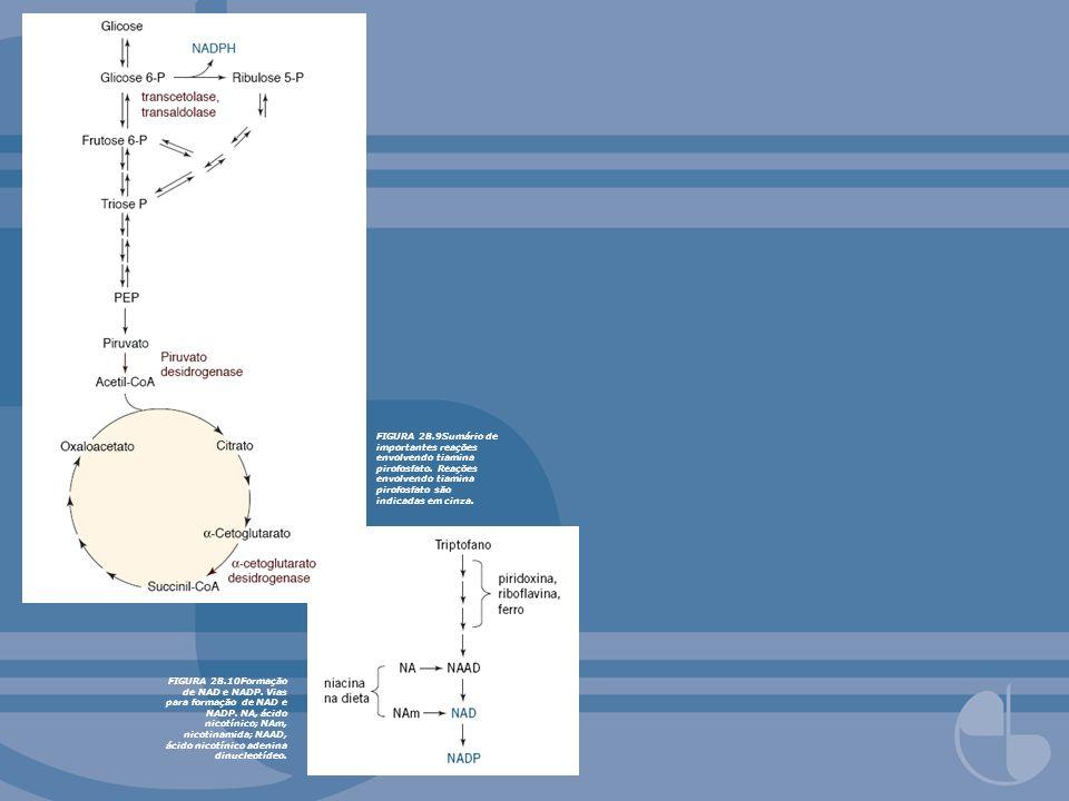FIGURA 28.9Sumário de importantes reações envolvendo tiamina pirofosfato. Reações envolvendo tiamina pirofosfato são indicadas em cinza. FIGURA 28.10F