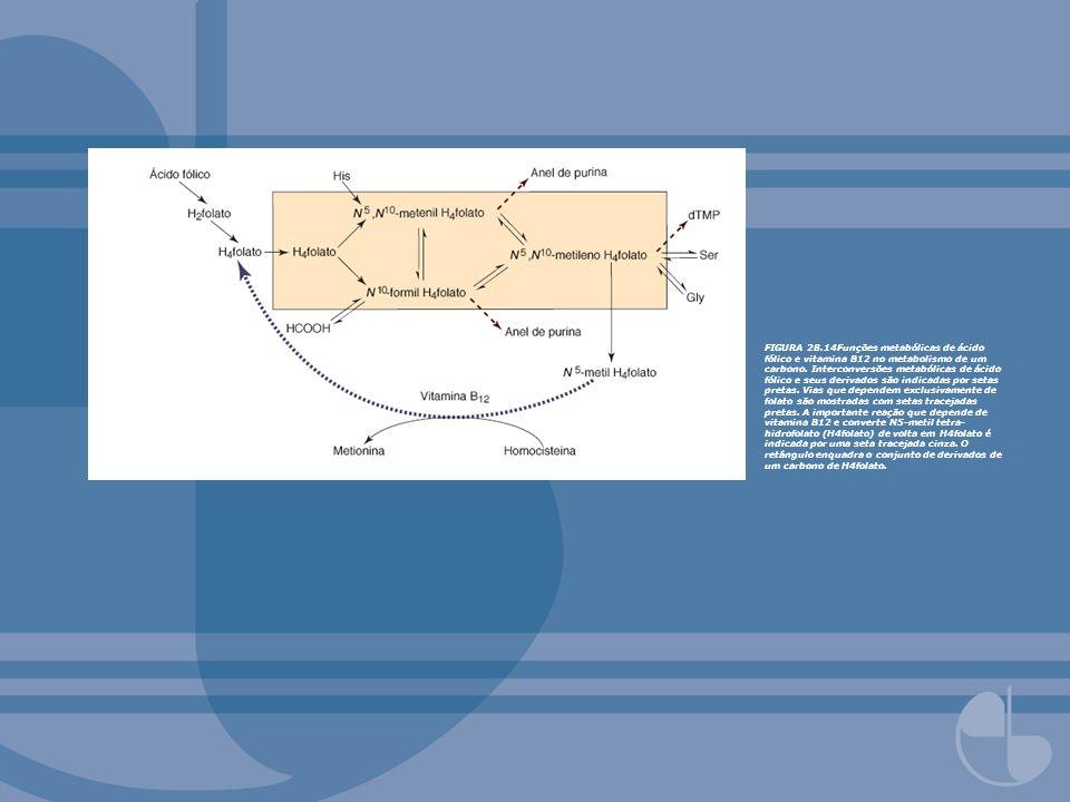FIGURA 28.14Funções metabólicas de ácido fólico e vitamina B12 no metabolismo de um carbono. Interconversões metabólicas de ácido fólico e seus deriva
