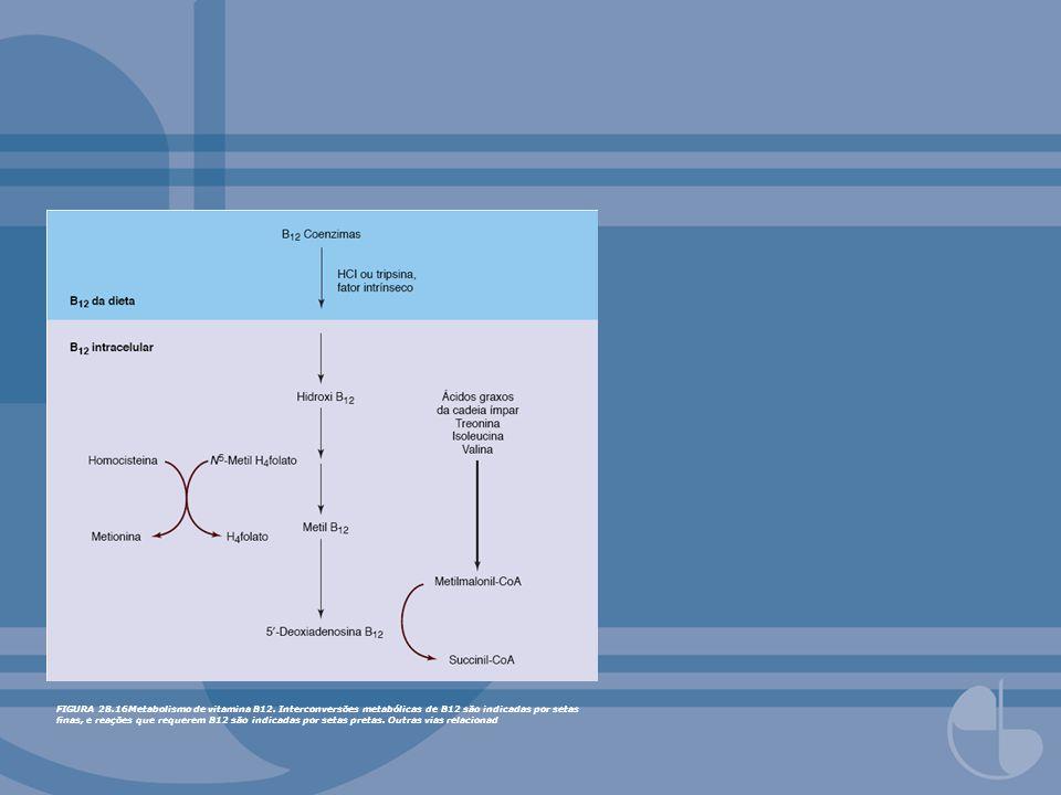 FIGURA 28.16Metabolismo de vitamina B12. Interconversões metabólicas de B12 são indicadas por setas nas, e reações que requerem B12 são indicadas por