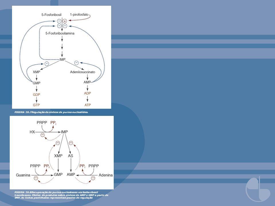 FIGURA 20.7Regulação da síntese de purina nucleotídeo. FIGURA 20.8Recuperação de purina nucleobases via fosforribosil transferases. Efeitos de produto