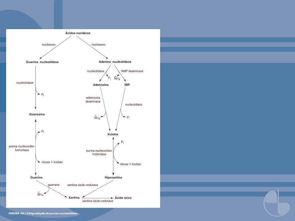 FIGURA 20.17Fontes de átomos de carbono e nitrogênio em pirimidinas.