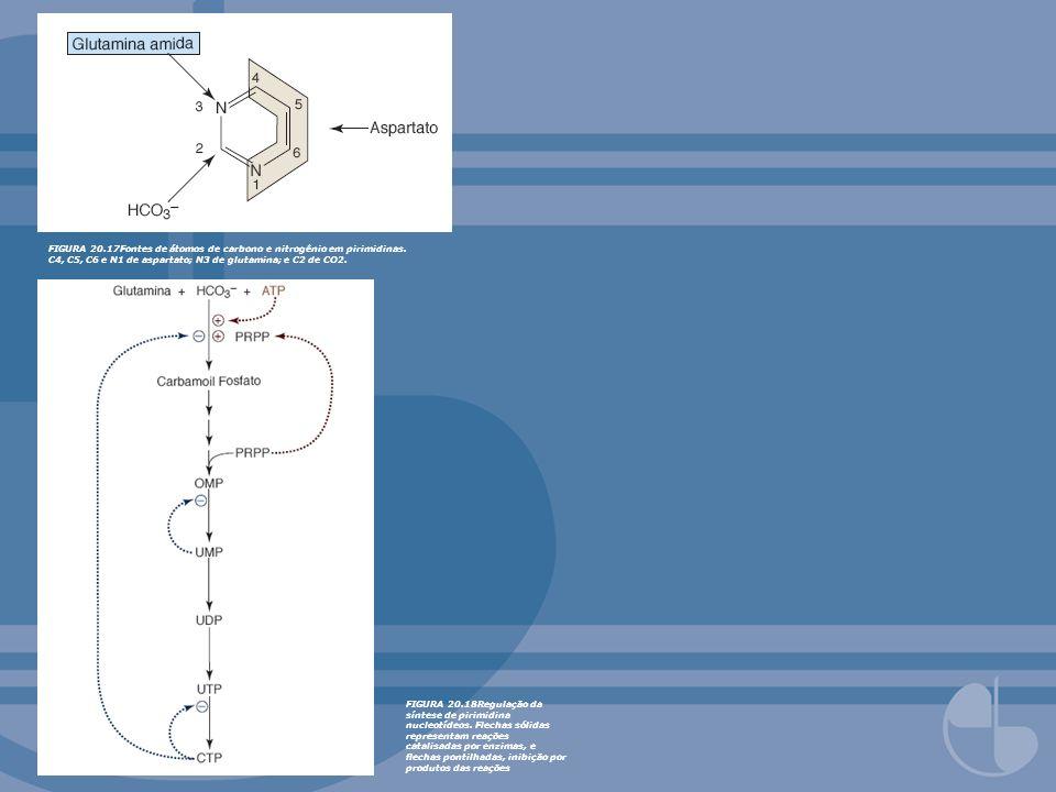 FIGURA 20.17Fontes de átomos de carbono e nitrogênio em pirimidinas. C4, C5, C6 e N1 de aspartato; N3 de glutamina; e C2 de CO2. FIGURA 20.18Regulação