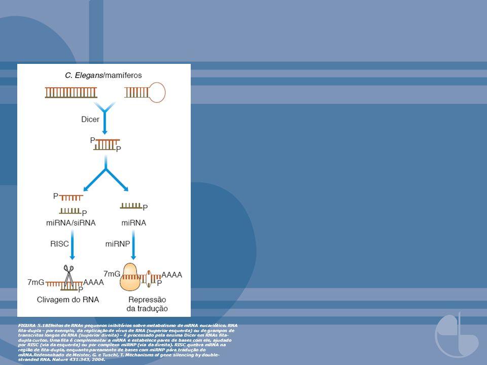 FIGURA 5.18Efeitos de RNAs pequenos inibitórios sobre metabolismo de mRNA eucariótico. RNA ta-dupla – por exemplo, da replicação de vírus de RNA (supe