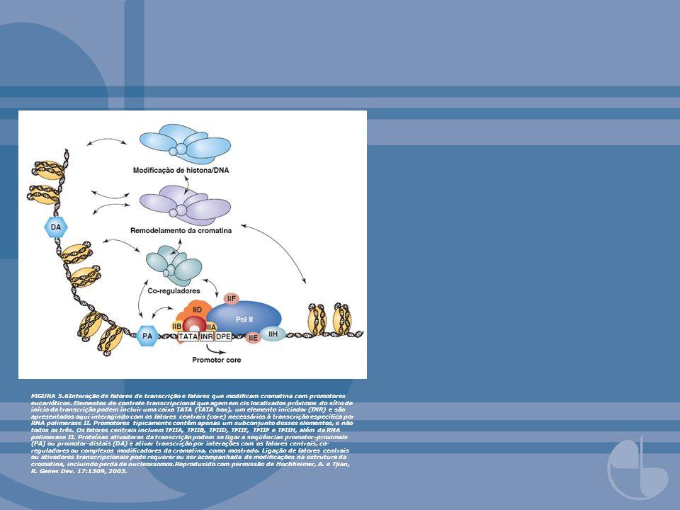FIGURA 5.6Interação de fatores de transcrição e fatores que modicam cromatina com promotores eucarióticos. Elementos de controle transcripcional que a