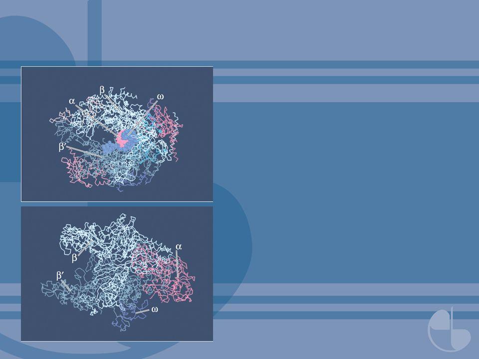 FIGURA 5.10Esquema para processar um tRNA eucariótico.