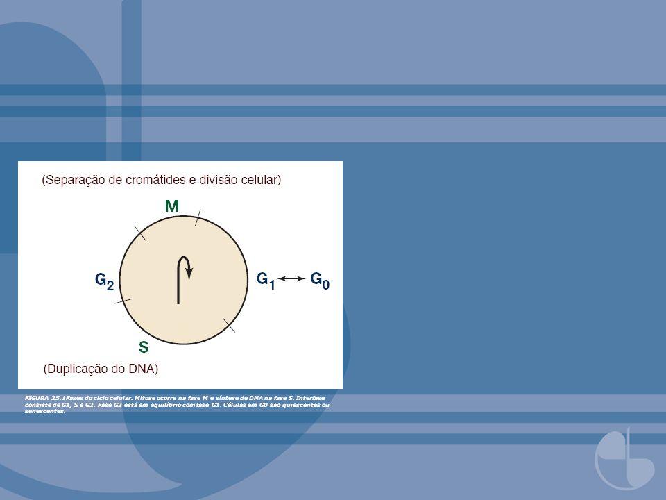 FIGURA 25.1Fases do ciclo celular. Mitose ocorre na fase M e síntese de DNA na fase S. Interfase consiste de G1, S e G2. Fase G2 está em equilíbrio co