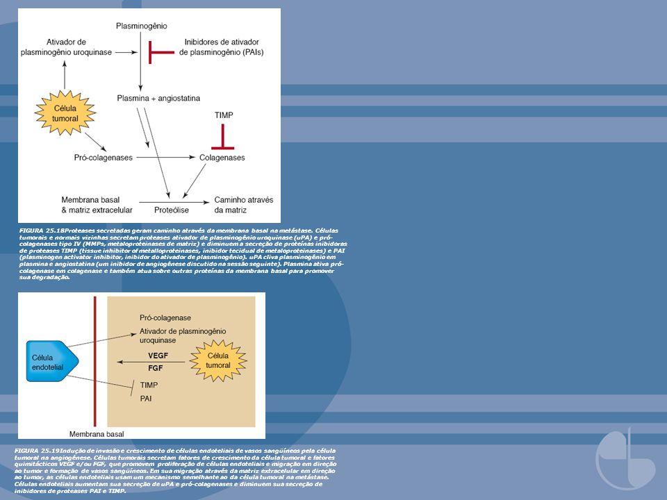 FIGURA 25.18Proteases secretadas geram caminho através da membrana basal na metástase. Células tumorais e normais vizinhas secretam proteases ativador