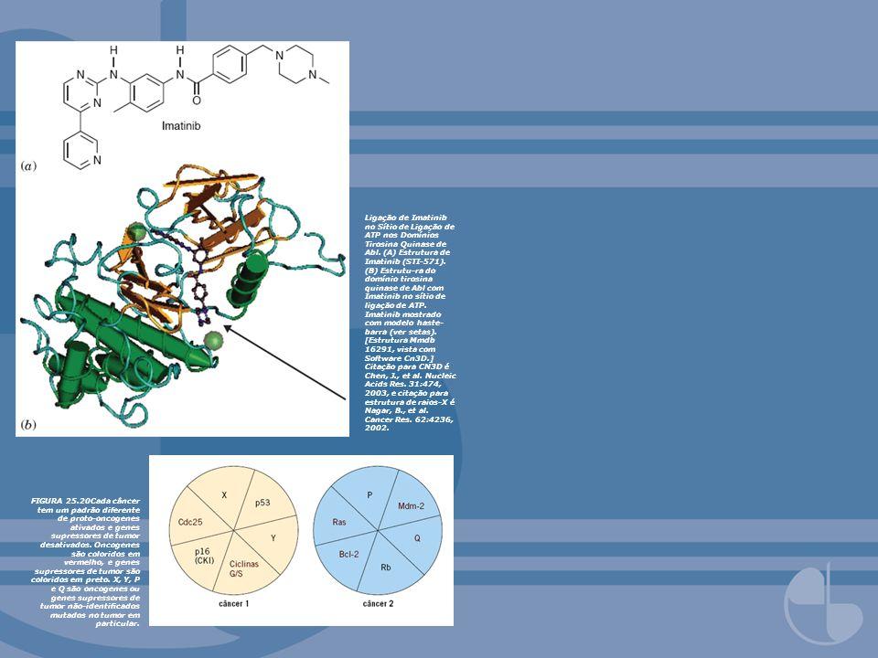 Ligação de Imatinib no Sítio de Ligação de ATP nos Domínios Tirosina Quinase de Abl. (A) Estrutura de Imatinib (STI-571). (B) Estrutu-ra do domínio ti