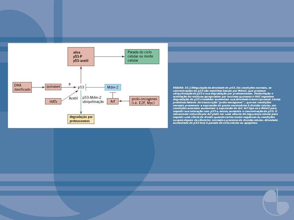 FIGURA 25.14Múltiplas vias podem ser reguladas por Ras.