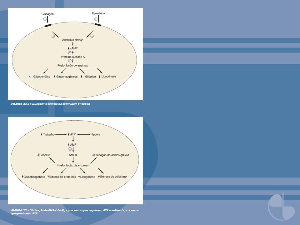 FIGURA 22.16Controle do metabolismo hepático por modicação covalente no estado bem-alimentado.