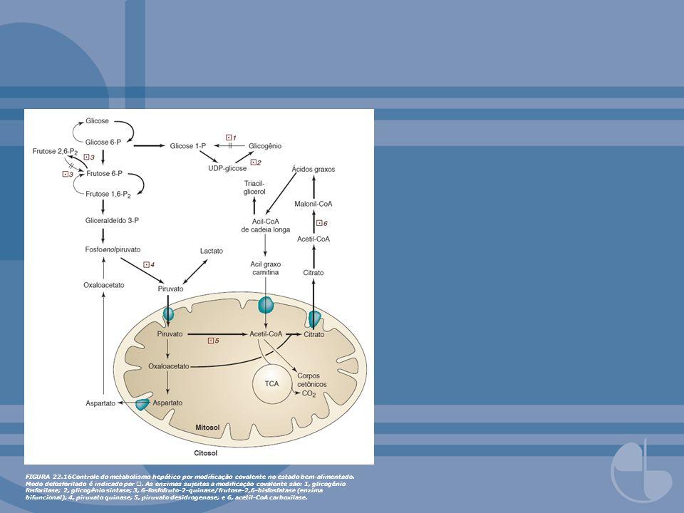 FIGURA 22.17Controle do metabolismo hepático por modicação covalente no estado de jejum.
