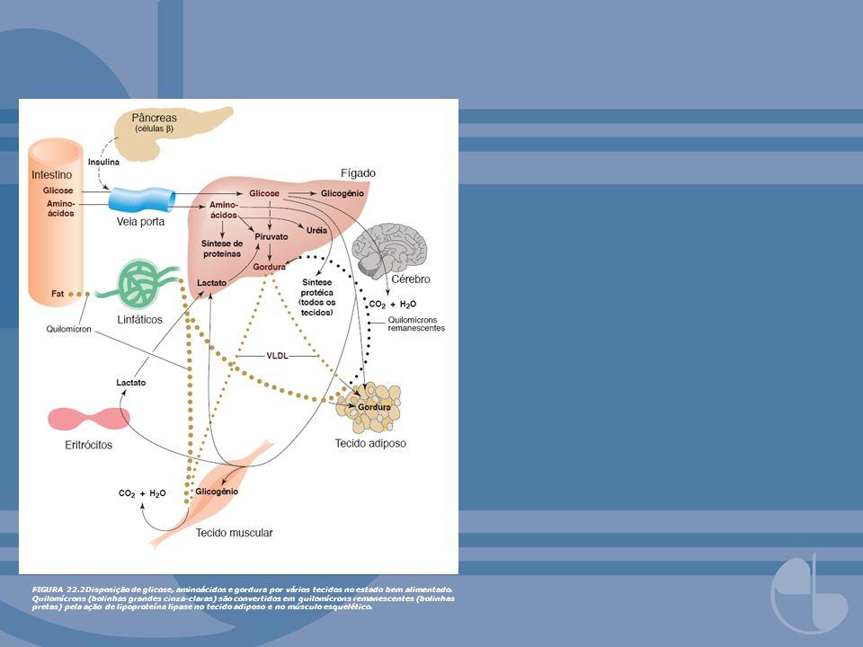 FIGURA 22.3Inter-relações metabólicas dos principais tecidos no estado de jejum inicial.
