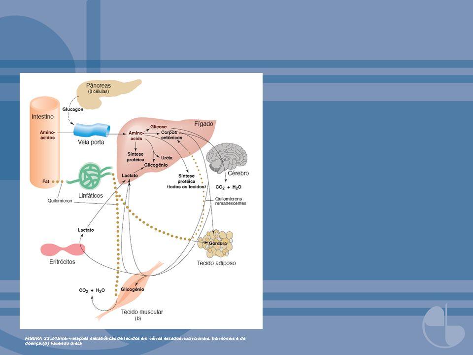FIGURA 22.24Inter-relações metabólicas de tecidos em vários estados nutricionais, hormonais e de doença.(c) Diabetes mellitus tipo 2.
