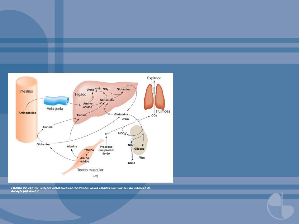 FIGURA 22.25Ciclo intercelular de glutamina do fígado.