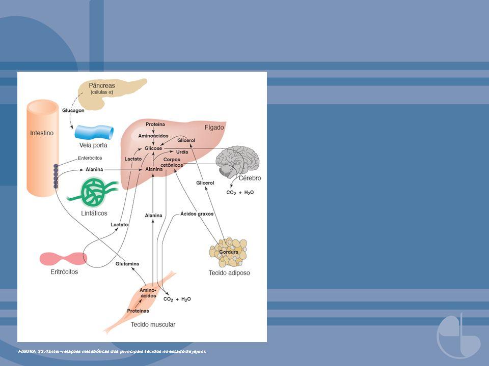 FIGURA 22.5Catabolismo da glutamina por células em divisão rápida.