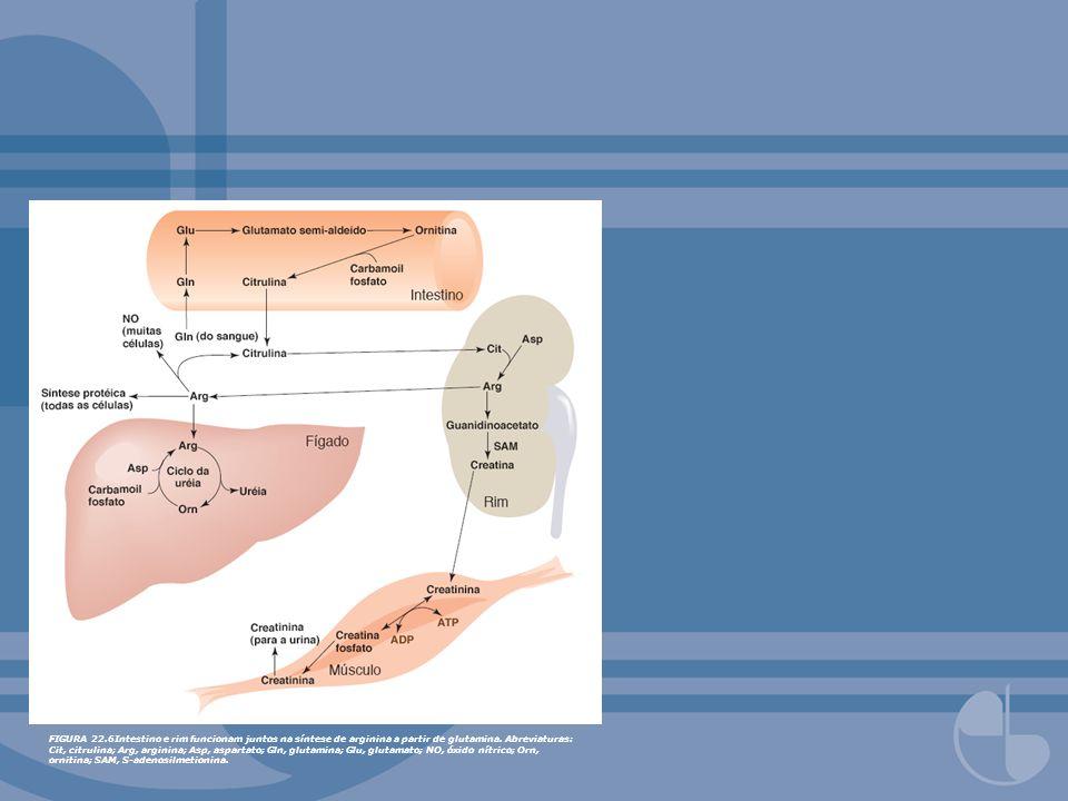 FIGURA 22.7Fígado fornece glutationa para outros tecidos.