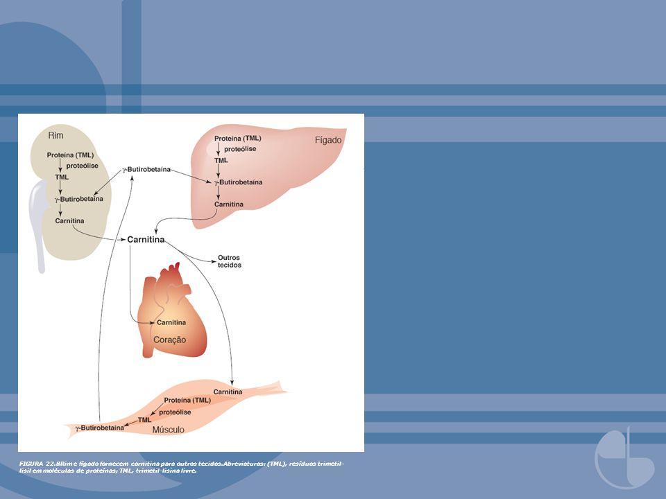 FIGURA 22.10Controle do metabolismo hepático no estado bem alimentado por efetores alostéricos