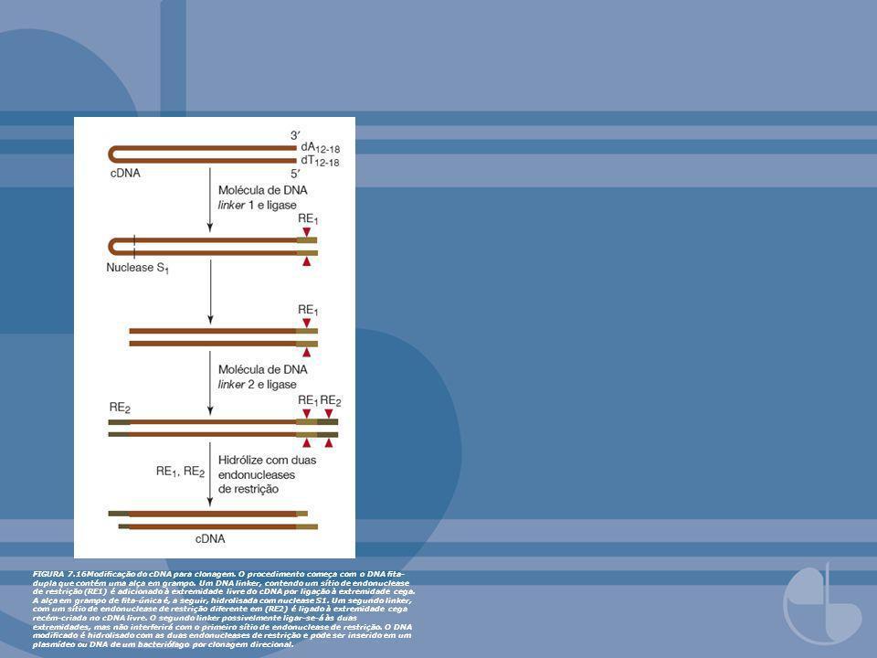 FIGURA 7.16Modicação do cDNA para clonagem. O procedimento começa com o DNA ta- dupla que contém uma alça em grampo. Um DNA linker, contendo um sítio