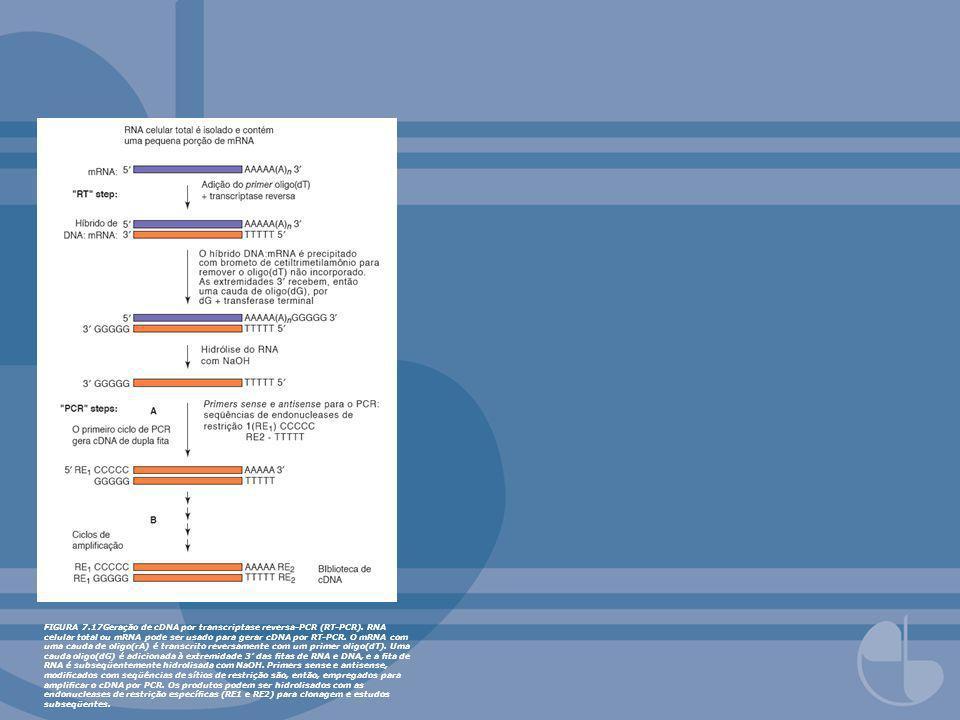 FIGURA 7.17Geração de cDNA por transcriptase reversa-PCR (RT-PCR). RNA celular total ou mRNA pode ser usado para gerar cDNA por RT-PCR. O mRNA com uma
