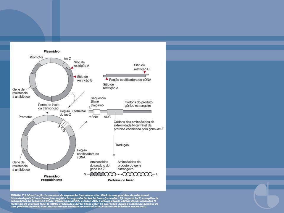 FIGURA 7.21Construção de um vetor de expressão bacteriano. Um cDNA de uma proteína de interesse é inserido depois (downstream) de seqüências regulatór