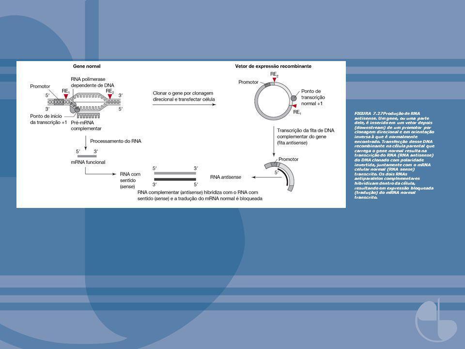 FIGURA 7.27Produção de RNA antisense. Um gene, ou uma parte dele, é inserido em um vetor depois (downstream) de um promotor por clonagem direcional e
