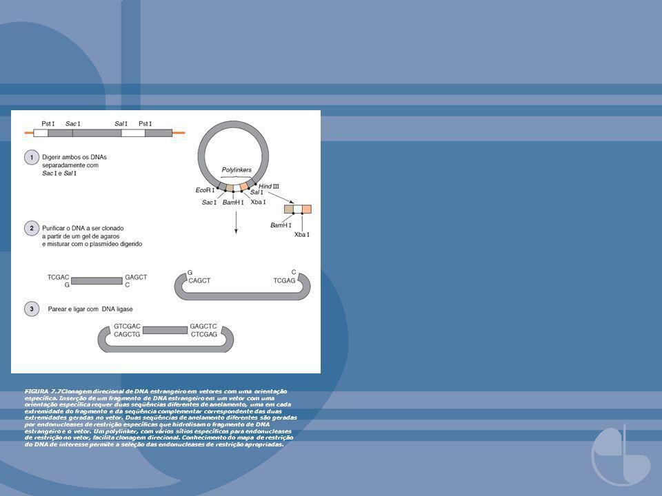 FIGURA 7.7Clonagem direcional de DNA estrangeiro em vetores com uma orientação especíca. Inserção de um fragmento de DNA estrangeiro em um vetor com u