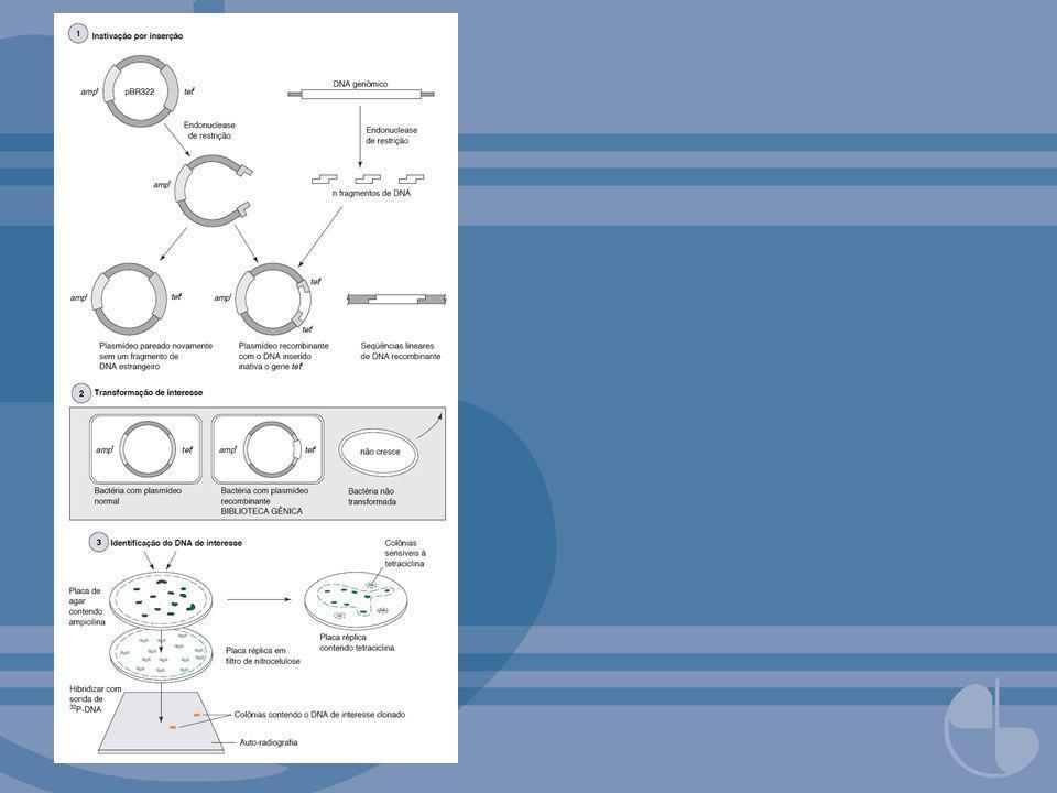 FIGURA 7.10α-Complementação para detecção de bactérias transformadas.