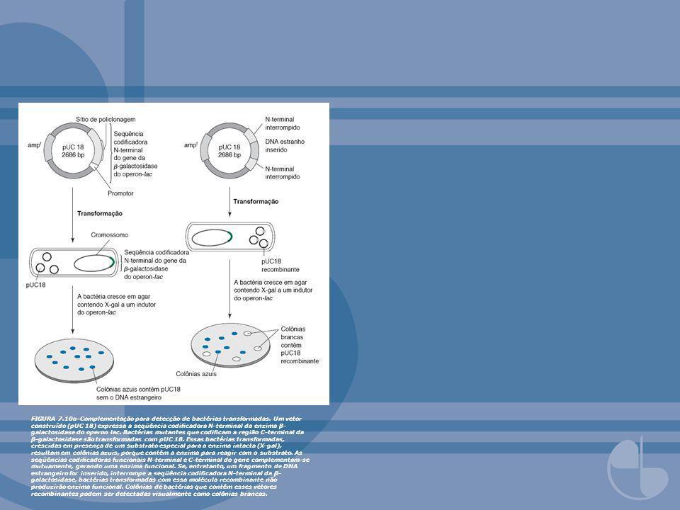 FIGURA 7.10α-Complementação para detecção de bactérias transformadas. Um vetor construído (pUC 18) expressa a seqüência codicadora N-terminal da enzim
