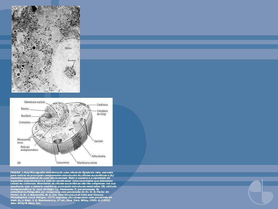 FIGURA 1.9(a) Micrograa eletrônica de uma célula de fígado de rato, marcada para indicar os principais componentes estruturais de células eucarióticas