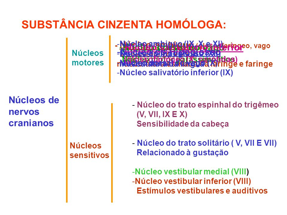 SUBSTÂNCIA CINZENTA HOMÓLOGA: Núcleos de nervos cranianos Núcleos motores - Núcleo ambiguo (glossofaríngeo, vago e acessório IX, X e XI): musculatura estriada da laringe e faringe Núcleos sensitivos - Núcleo do trato espinhal do trigêmeo (V, VII, IX E X) Sensibilidade da cabeça - Núcleo do trato solitário ( V, VII E VII) Relacionado à gustação -Núcleo vestibular medial (VIII) -Núcleo vestibular inferior (VIII) Estímulos vestibulares e auditivos -Núcleo do Hipoglosso Musculatura da língua -Núcleo dorsal do vago Núcleo motor parassimpático -Núcleo salivatório inferior (glossofaríngeo IX: parótidas) -Núcleo ambiguo (IX, X e XI) -Núcleo do hipoglosso (XII) -Núcleo dorsal do vago (X) -Núcleo salivatório inferior (IX)