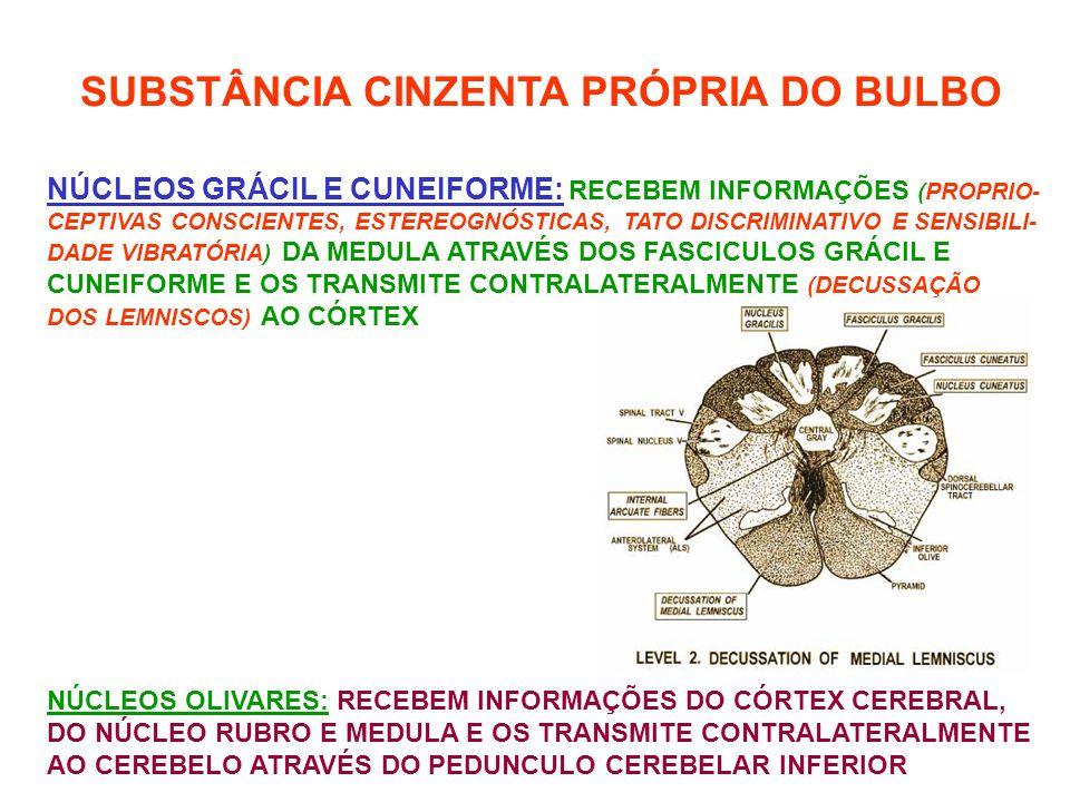 SUBSTÂNCIA CINZENTA PRÓPRIA DO BULBO NÚCLEOS GRÁCIL E CUNEIFORME: RECEBEM INFORMAÇÕES (PROPRIO- CEPTIVAS CONSCIENTES, ESTEREOGNÓSTICAS, TATO DISCRIMINATIVO E SENSIBILI- DADE VIBRATÓRIA) DA MEDULA ATRAVÉS DOS FASCICULOS GRÁCIL E CUNEIFORME E OS TRANSMITE CONTRALATERALMENTE (DECUSSAÇÃO DOS LEMNISCOS) AO CÓRTEX NÚCLEOS OLIVARES: RECEBEM INFORMAÇÕES DO CÓRTEX CEREBRAL, DO NÚCLEO RUBRO E MEDULA E OS TRANSMITE CONTRALATERALMENTE AO CEREBELO ATRAVÉS DO PEDUNCULO CEREBELAR INFERIOR