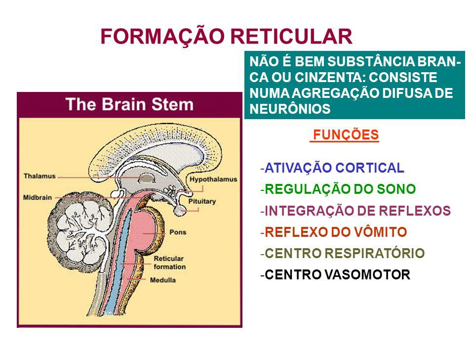 FORMAÇÃO RETICULAR NÃO É BEM SUBSTÂNCIA BRAN- CA OU CINZENTA: CONSISTE NUMA AGREGAÇÃO DIFUSA DE NEURÔNIOS FUNÇÕES -ATIVAÇÃO CORTICAL -REGULAÇÃO DO SONO -INTEGRAÇÃO DE REFLEXOS -REFLEXO DO VÔMITO -CENTRO RESPIRATÓRIO -CENTRO VASOMOTOR
