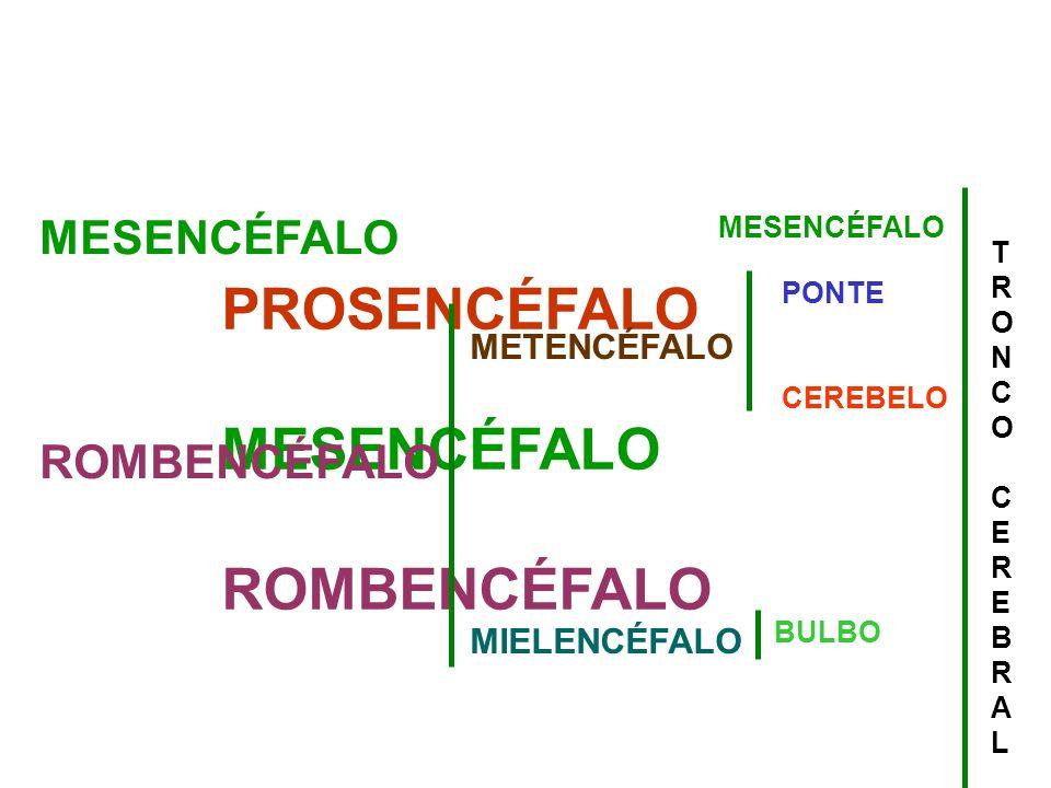 PROSENCÉFALO MESENCÉFALO ROMBENCÉFALO MESENCÉFALO ROMBENCÉFALO METENCÉFALO MIELENCÉFALO PONTE CEREBELO BULBO TRONCOCEREBRALTRONCOCEREBRAL MESENCÉFALO