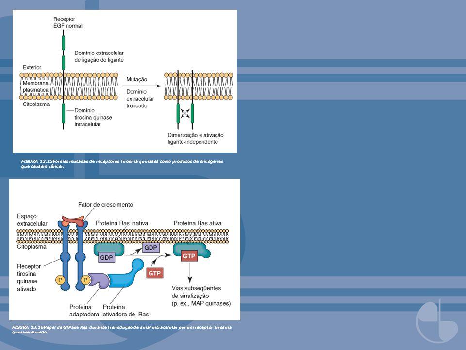 FIGURA 13.15Formas mutadas de receptores tirosina quinases como produtos de oncogenes que causam câncer. FIGURA 13.16Papel da GTPase Ras durante trans