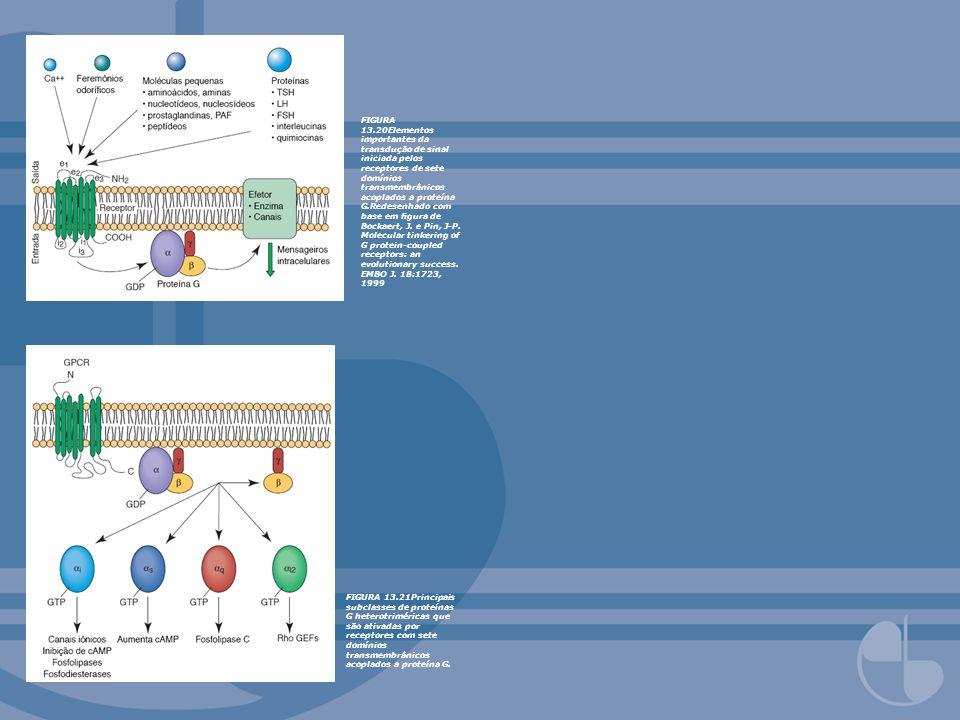 FIGURA 13.20Elementos importantes da transdução de sinal iniciada pelos receptores de sete domínios transmembrânicos acoplados a proteína G.Redesenhad