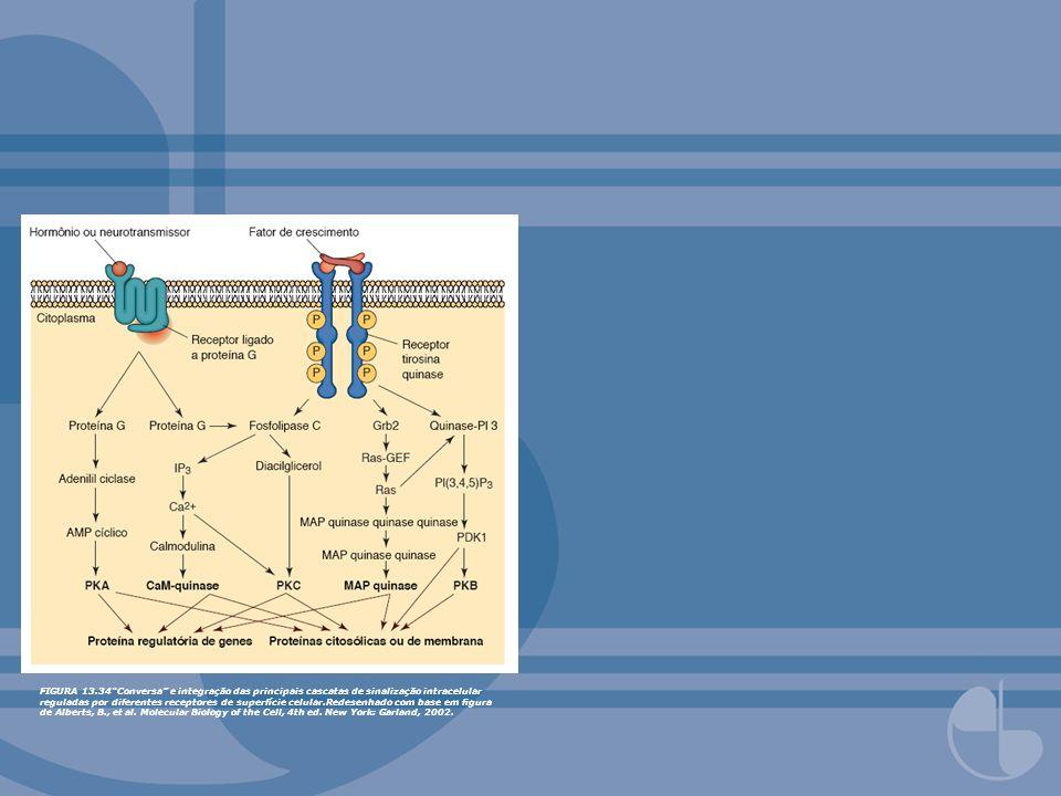 FIGURA 13.34Conversa e integração das principais cascatas de sinalização intracelular reguladas por diferentes receptores de superfície celular.Redese