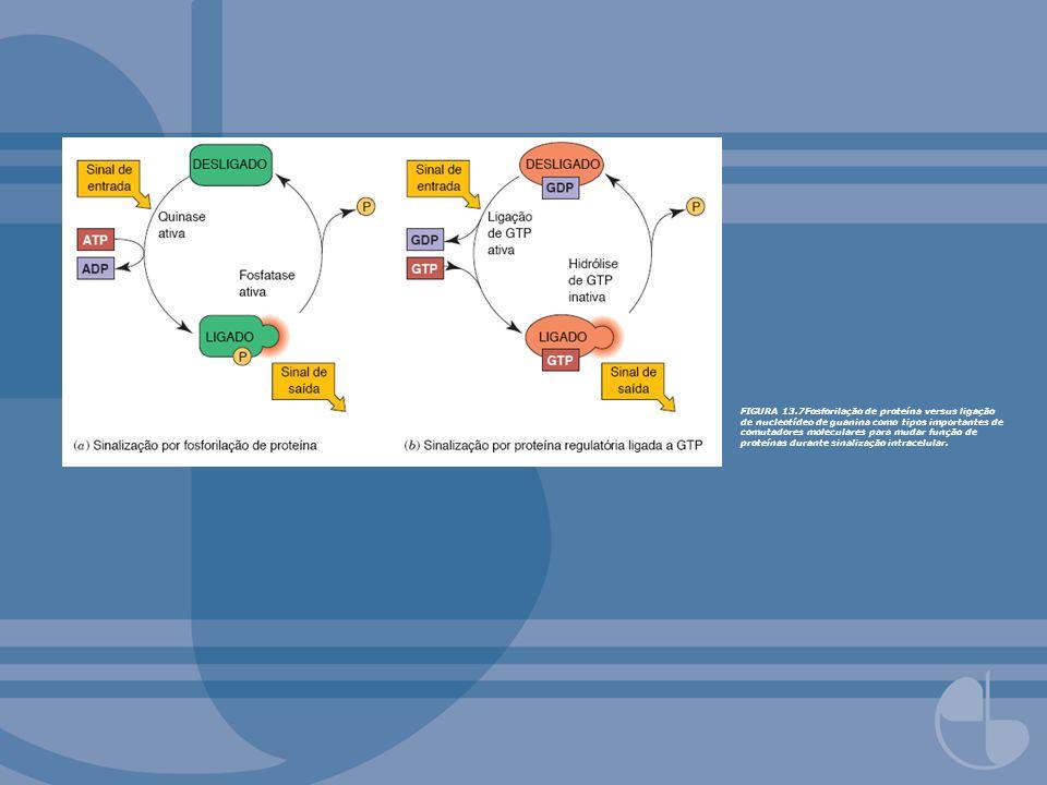 FIGURA 13.7Fosforilação de proteína versus ligação de nucleotídeo de guanina como tipos importantes de comutadores moleculares para mudar função de pr