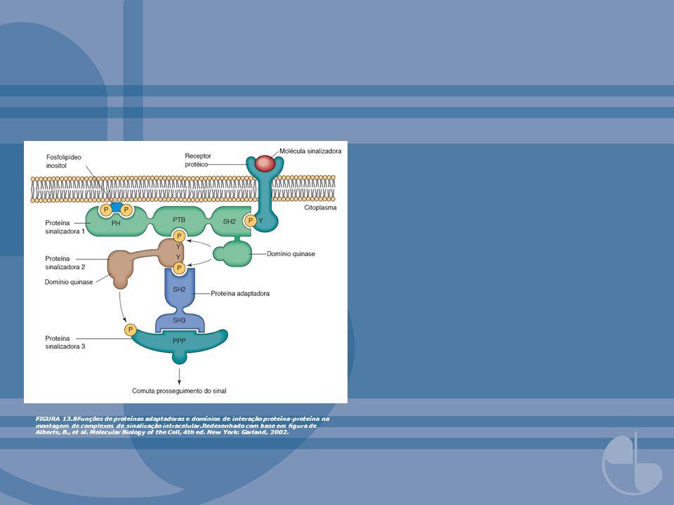 FIGURA 13.8Funções de proteínas adaptadoras e domínios de interação proteína-proteína na montagem de complexos de sinalização intracelular.Redesenhado