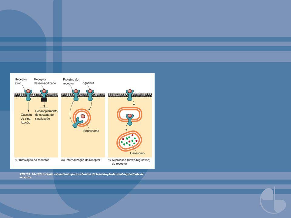FIGURA 13.26Papel da proteína quinase A nas cascatas de sinalização intracelular reguladas por AMP cíclico.Redesenhado com base em gura de Alberts, B., et al.