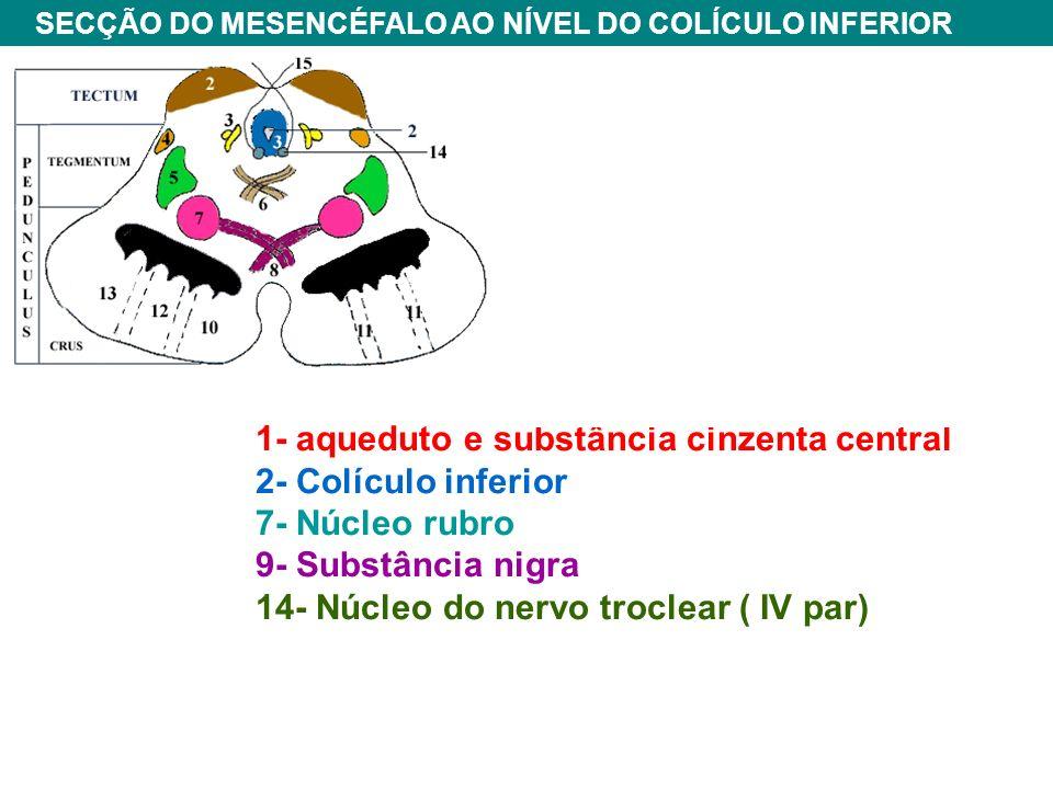 1- aqueduto e substância cinzenta central 2- Colículo inferior 7- Núcleo rubro 9- Substância nigra 14- Núcleo do nervo troclear ( IV par) SECÇÃO DO MESENCÉFALO AO NÍVEL DO COLÍCULO INFERIOR