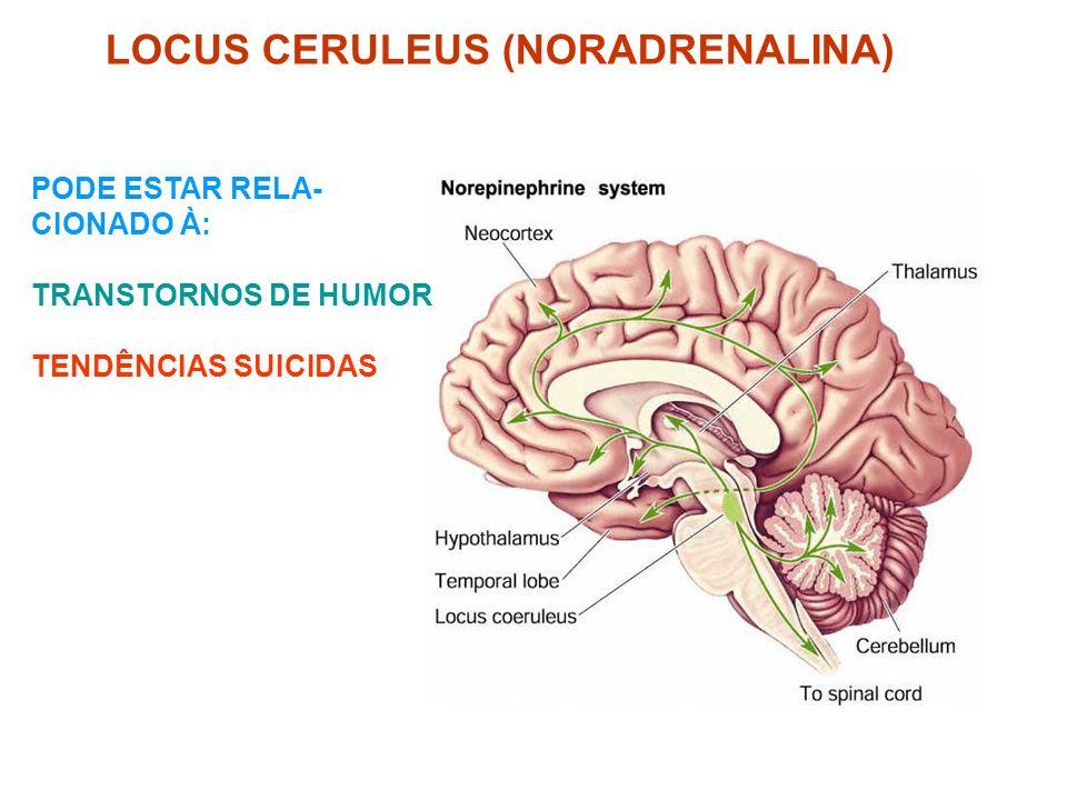 LOCUS CERULEUS (NORADRENALINA) PODE ESTAR RELA- CIONADO À: TRANSTORNOS DE HUMOR TENDÊNCIAS SUICIDAS