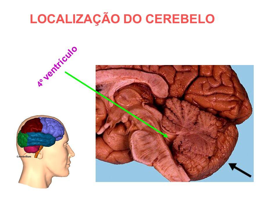 LOCALIZAÇÃO DO CEREBELO 4º ventrículo