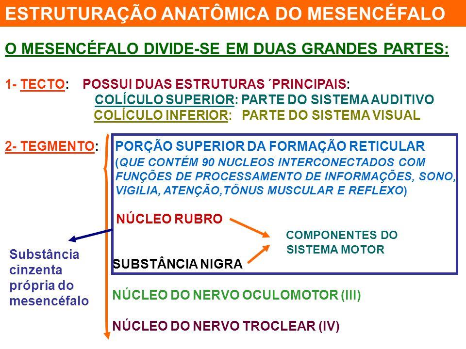 O CEREBELO PARTICIPA DO SISTEMA DE CONTROLE DOS MOVIMENTOS DETERMINA A SEQÜÊNCIA TEMPORAL DA CONTRAÇÃO DE DIFERENTES MUSCULOS EM MOVIMENTOS COMPLEXOS CONECTA-SE COM: O CÓRTEX MOTOR GÂNGLIOS DA BASE FORMAÇÃO RETICULAR MEDULA ESTUDOS MAIS RECENTES MOSTRAM SUA RELAÇÃO COM A COGNIÇÃO E COM AS EMOÇÕES