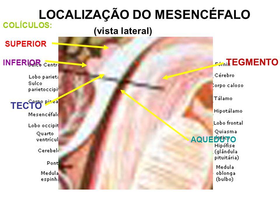 LOCALIZAÇÃO DO MESENCÉFALO (vista lateral) TECTO TEGMENTO COLÍCULOS: SUPERIOR INFERIOR AQUEDUTO